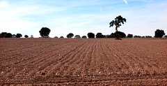 Countryside Farmland _3320 (hkoons) Tags: western europe campillo castile castileleon european iberia leon mediterranean spain