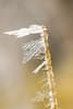 Opere d'arte di questo inverno ❄️ (saurabia) Tags: macro ghiaccio neve snow icesnow ice