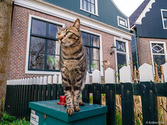 Pussycat (✦ Erdinc Ulas Photography ✦) Tags: kat cat pussy pussycat animal hairy netherlands holland nederland dutch zaandam city house traditional portrait focus close window zaanse schans panasonic kitten black eyes brown fence brick wood tree