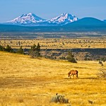 Warm Springs Wild Horse 3947 C thumbnail