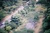 F1020008 (ev3lyn) Tags: nature singapore bukit timah reserve