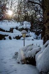 Snow and sun (L'Teigneux) Tags: 2018 arbre bonhommedeneige hiver landscape neige paysage rayon snow soleil sun tree winter