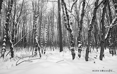 Morning Forest Walk (mswan777) Tags: white black monochrome ansel landscape 1020mm sigma d5100 nikon stevensville michigan nature outdoor trail hike morning snow winter scenic forest tree wood
