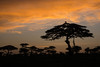 Another Beautiful Day (Ring a Ding Ding) Tags: 2018 africa ascilia canoneos5dmk111 clouds namiri serengeti tanzania earlymorning nature safari sky sunrise wildlife shinyangaregion coth coth5