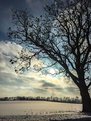 The Tree (ruimc77) Tags: winter battle creek mi michigan us usa inverno sky tree trees arvore árvore arvores árvores season seasons weather iphone 6 midwest snow neve nieve