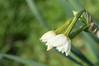 Ψίνθος (Psinthos.Net) Tags: ψίνθοσ psinthos ιανουάριοσ γενάρησ january winter χειμώνασ φύση εξοχή nature countryside afternoon απόγευμα απόγευμαχειμώνα χειμωνιάτικοαπόγευμα λουλούδια άγριαλουλούδια αγριολούλουδα wildflowers yellowflowers κίτριναλουλούδια χόρτα greens narcissus νάρκισσοσοκυπελλοφόροσ νάρκισσοσ τσαμπάκι τσαμπάκια μυρσίτζι μυρσίτζια ηλιόλουστημέρα sunnyday φώσ φώσήλιου φώσηλίου sunlight light