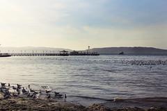 IMG_9702 (noemislee) Tags: el chaco playa paracas peru perú tourism beach fun birds nature ocean sea peruana noemislee noemi slee noemí tatiana vanessa ximena sánchez mendoza freedom