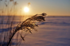 Joensuu - Finland (Sami Niemeläinen (instagram: santtujns)) Tags: joensuu suomi finland pyhäselkä kuhasalo luonto nature sunset auringonlasku talvi winter landscape maisema lake järvi frozen snow ice