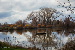 Winter at Gray Lodge (buffdawgus) Tags: buttecounty california californiacentralvalley canon5dmarkiii canon70200mm28l graylodgepreserve landscape lightroom6 sacramentovalley sacramentovalleywetlands topazsw wetlands