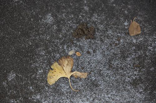 171008-2174-Leaf