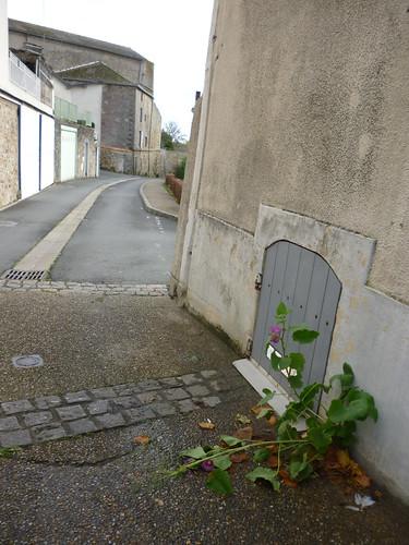 Rose Trémière - Rue de la Trinité - Mauléon