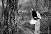 Mailbox (AP Imagery) Tags: monochrome old kentucky ky bw rural blackandwhite decay mailbox usa