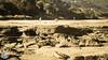 DSC_0058 (ahmed.huwait) Tags: 2017 australia greatoceanrd lorne melbourne beach jan