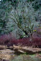 Winter color exists (kellypettit) Tags: kellypettit photography musician nanaimo westcoast wetcoast winter dark beautifulbc