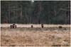 export_IMG_1113.jpg (Zi Ro) Tags: nationaalpark vogels hoge veluwe vogelhut schaarsbergen otterlo edelhert overige hogeveluwe