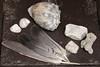 En la naturaleza (Letua) Tags: 52semanas 52weeksproject caracoles feathers grey gris lifeisarainbow naturaleza nature piedras plumas seashells stones