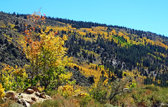 First Signs of Autumn in Rock Creek Canyon, CA 2016 (inkknife_2000 (9 million views)) Tags: sierranevadarange rockcreekcanyon fallcolors leaveschanging autumn dgrahamphoto california usa landscapes mountain gold fallcolor