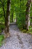 enter the woods (aniretak) Tags: nature green forest scotland unitedkingdom greatbritain europe travel trip hike outdoor trees path pathway branches woods leaves