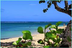 Plage de l' Autre Bord ©Sous le soleil des Tropiques (philippedaniele) Tags: plage caraïbes antilles guadeloupe lemoule végétation soleil bleu