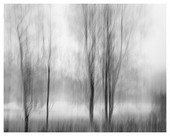 Edge of the loch (AEChown) Tags: trees loch scotland blur icm intentionalcameramovement mono monochrome blackandwhite landscape