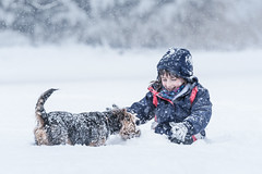 Playing in the snow! (Nathan J Hammonds) Tags: snow dog doggy play playing winter welsh terrier uk kent cold nikon d750 tamron 70200 happy