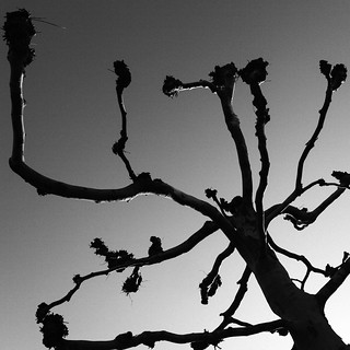 Sweden's Joshua Tree