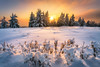 winter wonderland (Alexander Lauterbach Photography) Tags: germany deutschland nrw sauerland hochsauerland winterberg kahlerasten asten nordrheinwestfalen snow winter sunset golden trees mountain landscape nature sony a7rii lee