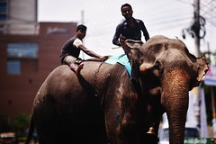 THE MAMMOTH SIZED SURPRISE (N A Y E E M) Tags: elephant mahout candid friday afternoon street crbroad chittagong bangladesh windshield