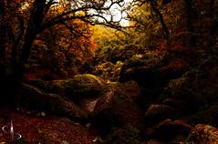 Un jour à Huelgoat (www.didierbonnettephotography.com) Tags: mystique iconic forest enchanted huelgoat breizh bzh mood atmosphère ambiance