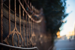 In the sunset light _ HFF! (pierfrancescacasadio) Tags: gennaio2018 17012018840a4719 fence fencefriday fencedfriday hff lugodiromagna 50mm sunset light bokeh