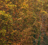 Nature paints it first (Robyn Hooz) Tags: padova monet quadro alberi foglie leaves fall autumn rami branches texture painting beauty natura