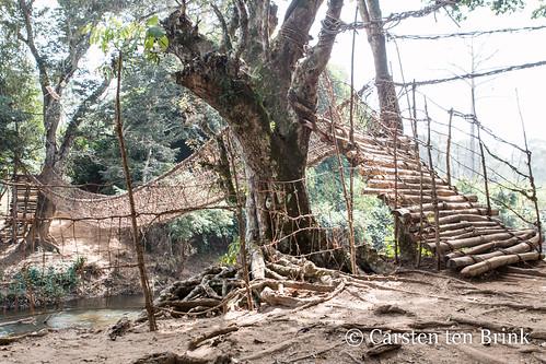 The liana bridge