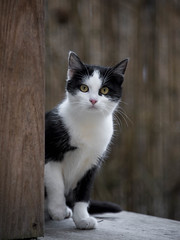 Arrêt sur image ***--+°---° (Titole) Tags: kitten cat kat katze gato gatto blackandwhite titole nicolefaton thechallengefactory 15challengeswinner challengegamewinner storybookttwwinner