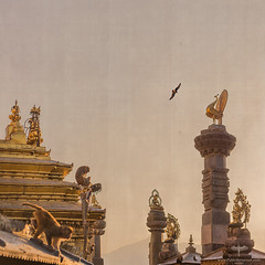 Asia / Nepal / Kathmandu / Swayambhunath (Pablo A. Ferrari) Tags: pabloferrariart nepal asia kathmandu architecture historical unesco temple swayambhunath stupa swoyambhustupa buddhism monkey bird templo