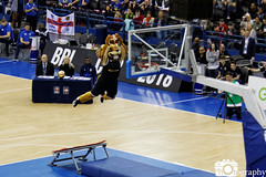 BBL Lion (Mike House Photography) Tags: basketball dunk contest british league cup final bbl birmingham nia national indoor arena sports game match jump jumping dunking backboard