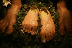 DSC02215 (washuugenius) Tags: photo wellington newzealand lordoftherings feet hobbit hobbitfeet prosthetic lotr