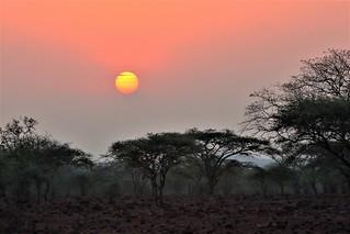 Sunrise on the bush