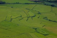 Zelený koberec (zcesty) Tags: vietnam23 terasa rýže pole krajina vietnam dosvěta hàgiang vn