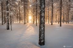 lights on (mainone) Tags: lappland landscape landschaft europa finland äkäslompolo suomi snow finnland trees forest sunstar light arctic europe sun winterwonderland