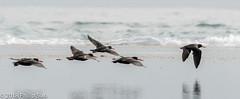 _DS57132.jpg (WaterDragon3) Tags: longreef birds