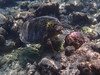 P1018682 (Karsten Kretz) Tags: underwater schildkröte turtle malediven maldives
