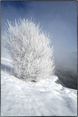 L1010088 (1) (geelog) Tags: 28mmf17summilux leicaq snow hoarfrost winter alberta bowriver calgary fishcreekprovincialpark hullswoods sikomelake ab canada