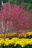 DSC02868_DxO (wut88) Tags: plumblossoms