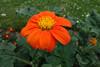 heute treibe ich es mal bunt . . . (mama knipst!) Tags: blume flower fleur juni sommer natur