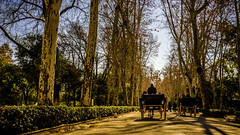 Parque de Maria Luisa, Sevilla (pepoexpress - A few million thanks!) Tags: nikon nikkor d750 nikond750 nikond75024120f4 pepoexpress sevilla parquedemarialuisa cochedecaballos parque © all rights reserved do use photography withaut permision allrightsreserved