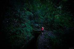 Dark Forest - Madeira, Portugal (Sebastian Bayer) Tags: olympus person madeira wald natur portugal bäume dunkel pflanzen wandern levada omdem5ii frau weg omd unheimlich urig pfad urlaub mystisch