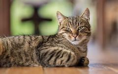 kittens (54) (Vlado Ferenčić) Tags: catsdogs vladimirferencic cats vladoferencic kitty kittens zagorje hrvatska croatia nikond600 nikkor8518 animals animalplanet
