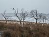 Bird in a tree (Craig Hannah) Tags: denshaw saddleworth pennine craighannah 2018 westriding yorkshire oldham greatermanchester england uk january winter tree moorland bird snow