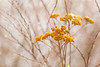 February (CecilieSonstebyPhotography) Tags: febrauary markiii macro winter closeup canon5dmarkiii ef100mmf28lmacroisusm bokeh canon branches orange dead ngc