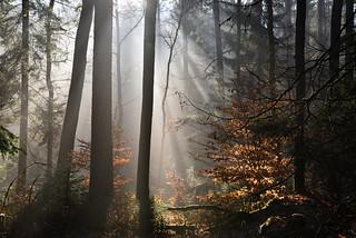 Quand les rayons du soleil illuminent la forêt